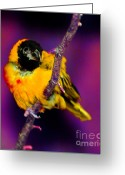 Colorful Birds Photo Greeting Cards - Got an Eye on You Greeting Card by Nick Gustafson