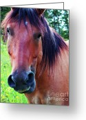 Contemporary Horse Digital Art Greeting Cards - Got Floss Greeting Card by Terril Heilman