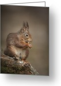 Peninsular Greeting Cards - Got Nuts Greeting Card by Andy Astbury