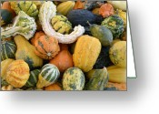 White Colors Greeting Cards - Gourds at a Virginia Farmers Market Greeting Card by Brendan Reals