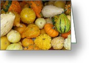 Fall Cards Greeting Cards - Gourds Galore Greeting Card by Carol Groenen