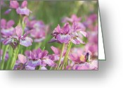 Stamen Greeting Cards - Grace Greeting Card by Kim Hojnacki