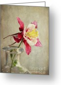 Soft Grunge Greeting Cards - Graceful Greeting Card by Darren Fisher