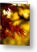 Red Fall Colors Greeting Cards - Graceful Leaves Greeting Card by Mike Reid