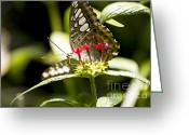 Beauty Mark Greeting Cards - Graceful Greeting Card by Leslie Leda