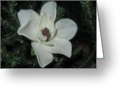 Sensitivity Pyrography Greeting Cards - Gracious Sensuality Greeting Card by Paula Andrea Pyle