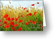 Green Day Greeting Cards - Grain and poppy field Greeting Card by Elena Elisseeva