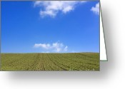 Cornfield Greeting Cards - Grain field. Auvergne. France Greeting Card by Bernard Jaubert
