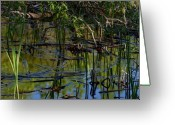 Reeds Reflections Greeting Cards - Grand Beach Marsh Greeting Card by Joanne Smoley