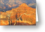 Awe Inspiring Greeting Cards - Grand Canyon 40 Greeting Card by Will Borden