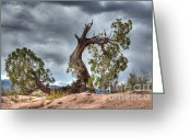 Light And Water Greeting Cards - Grand Canyon Facing The Storm Greeting Card by Bob Christopher