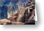 Light And Water Greeting Cards - Grand Canyon Roxie Roller Greeting Card by Bob Christopher