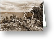 Colorado Framed Prints Greeting Cards - Grand Canyon through Old Trees Greeting Card by M K  Miller