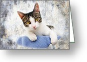 Kitty Digital Art Greeting Cards - Grand Kitty Cuteness 2 Greeting Card by Andee Photography