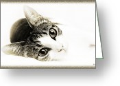 Fine Art Cat Greeting Cards - Grand Kitty Cuteness 3 High Key Greeting Card by Andee Photography