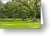 Louisiana Greeting Cards - Grand Lady Greeting Card by Scott Pellegrin