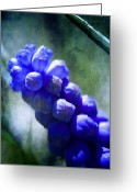 Grape Macro Digital Art Greeting Cards - Grape Hyacinth Greeting Card by Ellen Lacey
