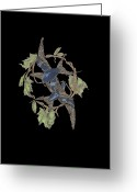 Vines Mixed Media Greeting Cards - Grapebirds Greeting Card by Andrew Morse