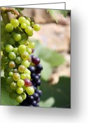 Green Vines Greeting Cards - Grapes Greeting Card by Jane Rix