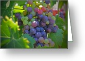 Landscape Cards Greeting Cards - Grapes Greeting Card by Kelly Wade