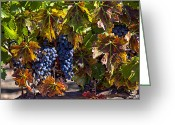 Autumn Season Greeting Cards - Grapes of the Napa Valley Greeting Card by Garry Gay