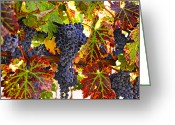 Food And Beverage Greeting Cards - Grapes on vine in vineyards Greeting Card by Garry Gay