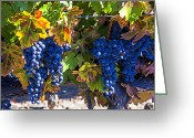 Berries Greeting Cards - Grapes ready for harvest Greeting Card by Garry Gay