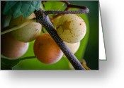 Yellow And Red Greeting Cards - Grapes with Color Greeting Card by James Barber