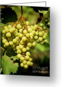 Bunch Greeting Cards - Grapes - yummy And healty Greeting Card by Christine Till