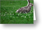 Hare Greeting Cards - Grass and the Hare Greeting Card by Jerry Cordeiro