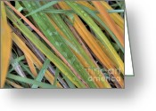 Suburbs Greeting Cards - Grass Droplets Greeting Card by Deborah Smolinske