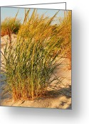 Seasons Framed Prints Prints Greeting Cards - Grass Dune I - Jersey Shore Greeting Card by Angie McKenzie