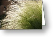 Chama River Greeting Cards - Grass Flow Greeting Card by FeVa  Fotos