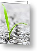 Brake Greeting Cards - Grass growing from crack in asphalt Greeting Card by Elena Elisseeva