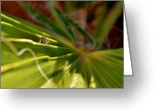 Green Grass Hopper Greeting Cards - Grass hopper Greeting Card by Werner Lehmann