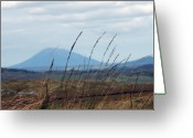 Misty Prints Prints Greeting Cards - Grass Greeting Card by Paul  Mealey