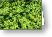 Mound Greeting Cards - Grass Whirlpool 2 Greeting Card by Hideaki Sakurai