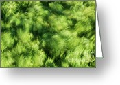 Mound Greeting Cards - Grass Whirlpool 3 Greeting Card by Hideaki Sakurai