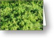 Mound Greeting Cards - Grass Whirlpool Greeting Card by Hideaki Sakurai