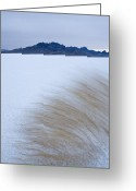 Desolate Landscapes Greeting Cards - Grasses In The Wind On The Bonneville Greeting Card by John Burcham