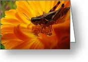 Floral Print Greeting Cards - Grasshopper Luncheon Greeting Card by Lianne Schneider
