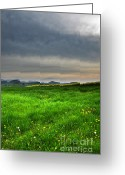 Basel Greeting Cards - Grassland Greeting Card by Bruno Santoro