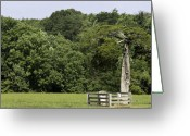 Cedar Fence Greeting Cards - Grave of Lafayette Meeks Appomattox Virginia Greeting Card by Teresa Mucha