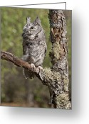 Lichen Image Greeting Cards - Gray Eastern Screech Owl Greeting Card by Cindy Lindow