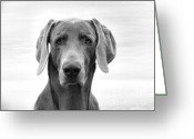 Weim Greeting Cards - Gray Ghost Greeting Card by Michelle Milano