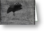 Passerines Greeting Cards - Gray Greeting Card by Gothicolors With Crows