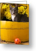Daisies Greeting Cards - Gray kitten in yellow bucket Greeting Card by Garry Gay