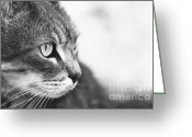 Gray Tabby Greeting Cards - Gray Tabby Greeting Card by Letitia M Lane