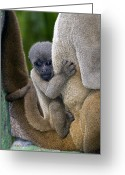 Amazon Greeting Cards - Gray Woolly Monkey Baby Greeting Card by Tony Camacho