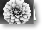 Head Greeting Cards - Graytones Flower Greeting Card by Photography P